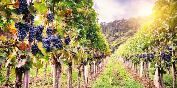 Low Hanging Fruits der schnelle Weg zur SEO